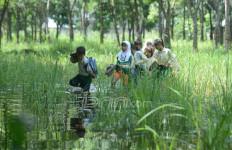 Miris, Jalan Ditutup Perusahaan, Para Pelajar Ini ke Sekolah Lewat Sawah dan Rawa - JPNN.com