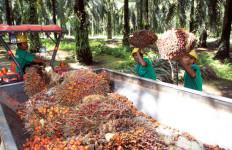 Wilmar Pelopori Kebijakan Perlindungan Pekerja Anak - JPNN.com