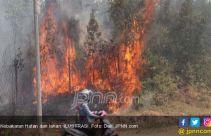 Walhi: Asap Karhutla Sangat Berbahaya - JPNN.com