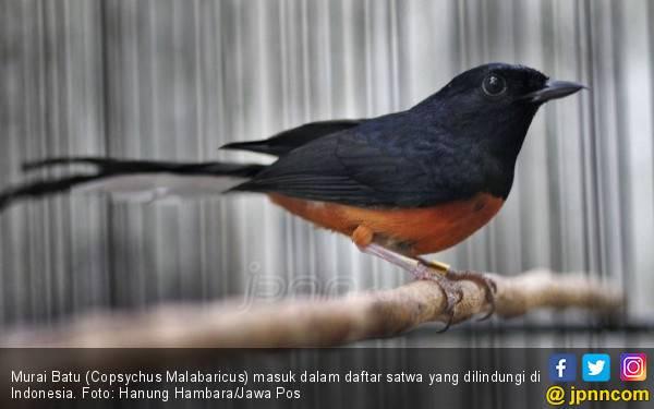 Pencinta Burung Jangan Khawatir Kriminalisasi, Santai aja - JPNN.com