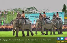 Tiga Gajah Iringi Pembukaan Pertikawan di Riau - JPNN.com