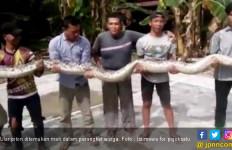 Warga Tangkap Ular Sepanjang 7 Meter di Sei Kepayang Asahan - JPNN.com