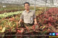 Dirjen Hortikultura Pangkas Proses Izin Ekspor Tanaman Hias - JPNN.com