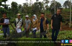 Subsektor Hortikultura Sangat Diminati Kaum Milenial - JPNN.com