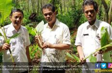 Petani Karanganyar Siap Tingkatkan Produksi Tanaman Herbal - JPNN.com
