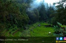Cabut Laporan ke KPK, CERI: Alih Fungsi Hutan Lindung di Banyuasin Sesuai Peraturan - JPNN.com