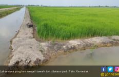Petani Sumsel Rasakan Manfaat Besar Program Serasi 220 Ribu Hektare - JPNN.com