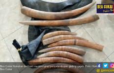 Bea Cukai Nunukan Bongkar Penyelundupan Gading Gajah - JPNN.com