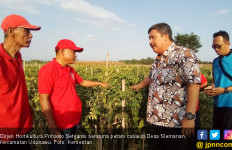 Program Grand Design Hortikultura Diyakini Bakal Perluas Pasar Ekspor - JPNN.com