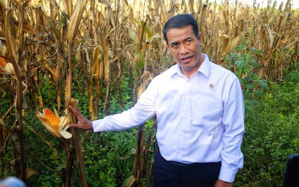 Di Pimpin Mentan Amran, Pembangunan Pertanian Dinilai Sukses, Ekspor Meningkat - JPNN.com