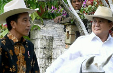 Yakini PKS Tak Akan Lari dari Prabowo karena TGB, Asalkan... - JPNN.com