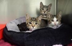 Pria Ini Ditangkap Lantaran Merebus 600 Kucing Hidup-Hidup dan Menjual Dagingnya - JPNN.com