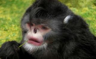 UNIK, Ada Penemuan Terbaru Monyet Bersin saat Musim Hujan dan Ikan Berjalan, Ini Fotonya.. - JPNN.com