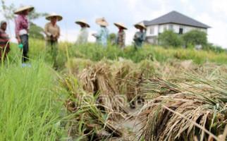 Perkuat Ketahanan Pangan, Kadin Geber Jakarta Food Security Summit - JPNN.com