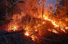Inilah Kesaksian Pendaki yang Lolos dari Kebakaran Hutan, Tujuh Tewas - JPNN.com