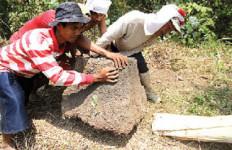 """""""Harta Karun"""" Majapahit Masih Banyak Terkubur di Sawah - JPNN.com"""