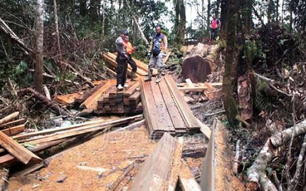 Tangkap Pelaku Illegal Logging, Ratusan Batang Kayu Diamankan - JPNN.com