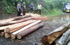PARAH: Pencurian Kayu di Kawasan Hutan Lindung Tak Terbendung - JPNN.com