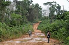 Hutan Lindung Bakal Dikelola Pihak Ketiga - JPNN.com