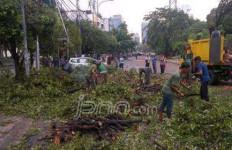 Waspada Pohon Tumbang! - JPNN.com