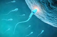 Apakah Aman Menelan Sperma? Ini Penjelasan Dokter - JPNN.com
