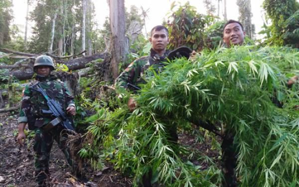 TNI Kembali Menemukan Ladang Ganja di Perbatasan RI-PNG, Milik Siapa? - JPNN.com