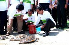 Lihat Foto Ini, Pak Jokowi Melepas 200 Ekor Penyu Sisik - JPNN.com
