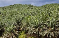 Walhi Apresiasi Perusahaan Perkebunan Kelapa Sawit - JPNN.com