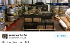 Kucing-kucing Ini Jagain Tempat Pembuatan Bir dari Serangan Tikus - JPNN.com