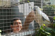 Yuddy Chrisnandi Sibuk Urus Burung - JPNN.com