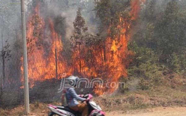 Kualitas Udara di Riau Semakin Baik, Jarak Pandang Hingga 10 Km - JPNN.com