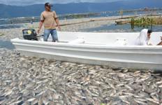 Lihat, Hamparan Ikan Mati di Danau Maninjau, Ribuan Ton! - JPNN.com