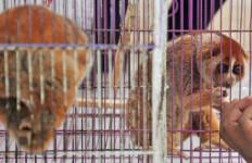 Binatang Lucu dan Menggemaskan, Tapi Kini Terancam Punah - JPNN.com