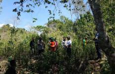 PARAH! Penjarah Hutan Lawan Aparat - JPNN.com