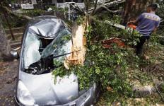 Inilah Syarat Mobil Tertimpa Pohon Bisa Diklaim - JPNN.com