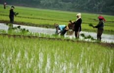 Kemendesa PDTT Integrasikan Ekonomi Kawasan Perdesaan - JPNN.com
