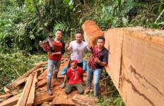 Astaga! Pohon-pohon Besar di Taman Nasional Ditebangi Pembalak Liar - JPNN.com