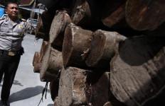 Lihat Nih, Enam Truk Kayu Ilegal Diamankan Polri dan Polisi Hutan - JPNN.com