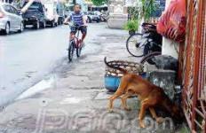 Megawati Meninggal, Anjing Liar Dibasmi - JPNN.com