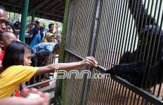 Hati-hati!!! Di Kebun Binatang Ragunan Ada... - JPNN.com