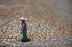 Ratusan Hektare Sawah Kekeringan di Tanahdatar - JPNN.com