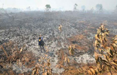 Polda Riau Sikat 8 Pelaku Pembakaran Lahan - JPNN.com