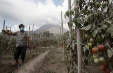 Petani di Sinabung Mengeluh Tak Punya Modal Lagi - JPNN.com