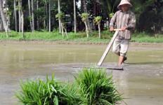 Tambang Makin Marak, Lahan Pertanian Kian Susut - JPNN.com