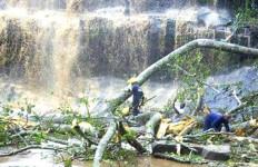 Pohon Tumbang di Air Terjun, 20 Tewas Secara Tragis - JPNN.com