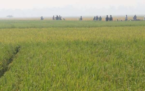 Kementan Berharap Daerah Tolak Izin Alih Fungsi Lahan Pertanian - JPNN.com