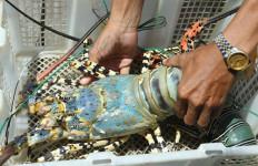 Penampungan Benih Lobster Ilegal Digerebek, Nilainya Mencapai Rp 48 Miliar - JPNN.com