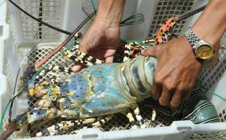 KKP Terus Tingkatkan Ekspor Produksi Lobster, Kepiting dan Rajungan - JPNN.com