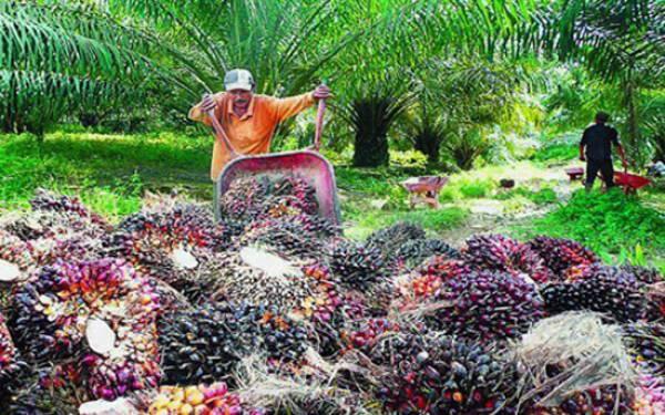 Gubernur Aceh Larang Penjualan CPO ke Luar Daerah - JPNN.com