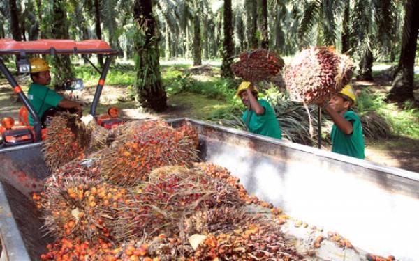SPSI Riau Minta Kemenaker Sikapi Ancaman PHK - JPNN.com